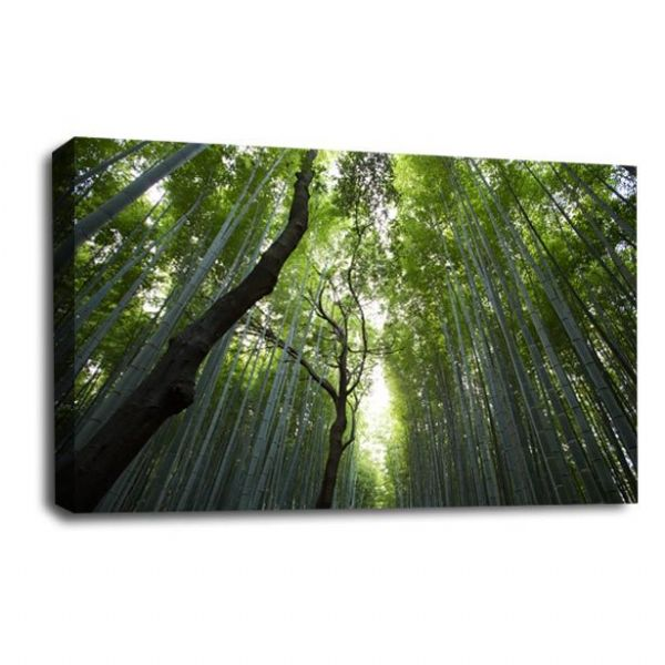 Forest Canvas Wall Art Calm Green Brown Trees Picture Print